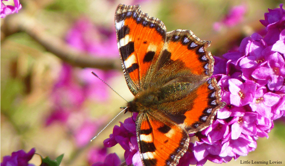 5 fun-filled days studying the butterfly life cycle this spring!